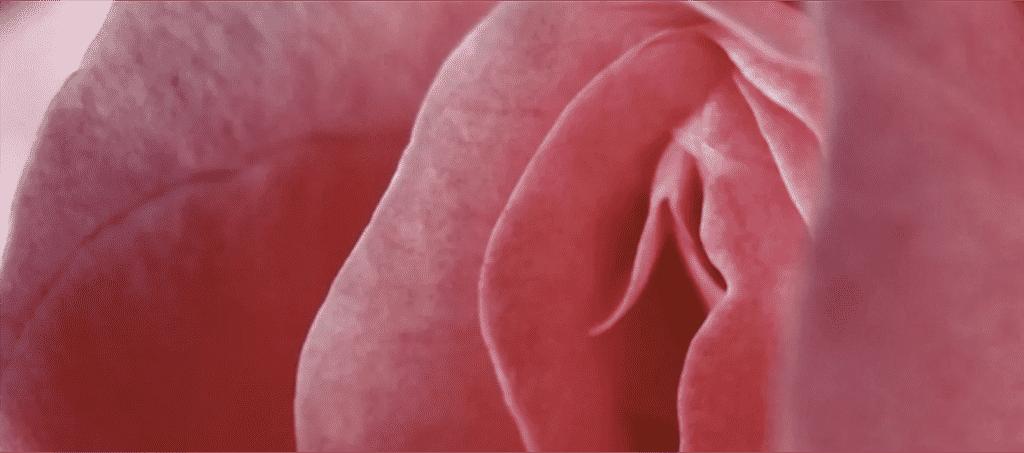 Unalome Thérapie, Corinne Chantegrelet, Le clitoris